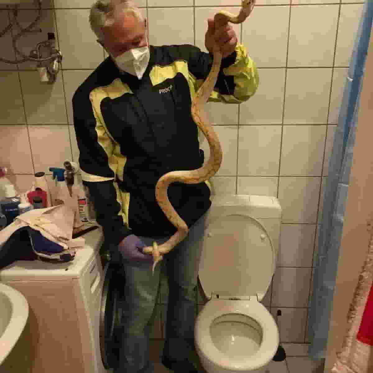 Mi ha morso un pitone nel mio bidet: a Graz, in Austria, era il serpente del vicino